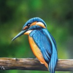 Eisvogel_Final_Airbrush_big